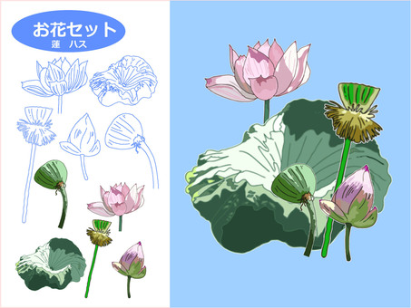 꽃 세트 연꽃 연꽃
