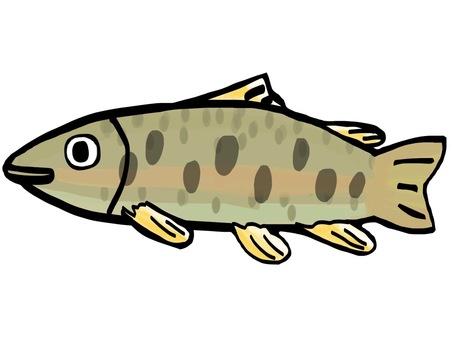Fish Yamame