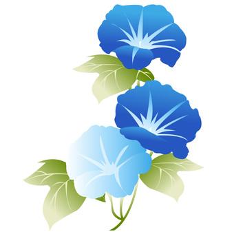 파란색과 하늘색 나팔꽃