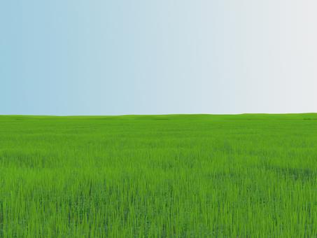 meadow (bright)