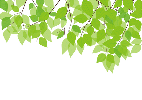 나뭇잎 이미지