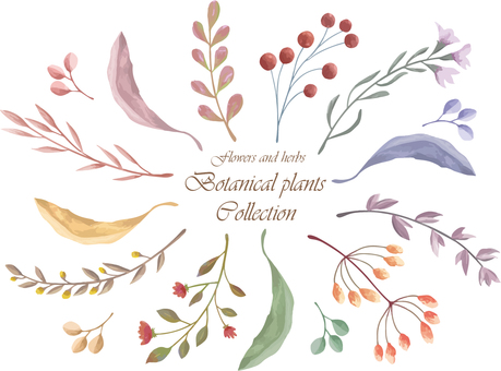 植物植物收藏2