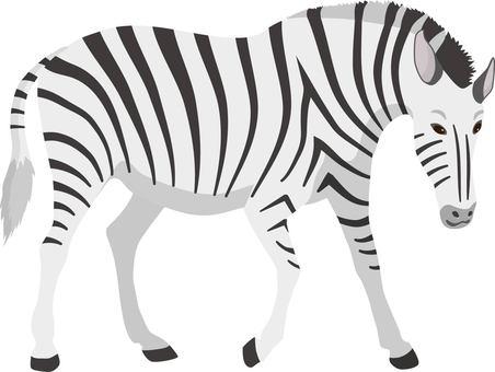 Zebra downward