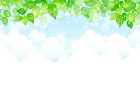 新鲜的绿色285