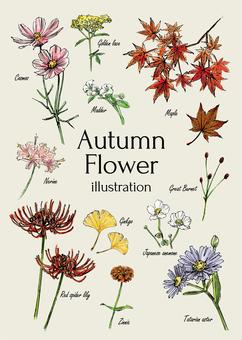 Autumn flower illustration