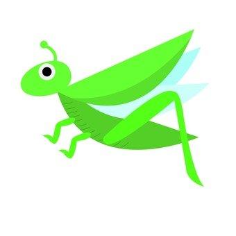 비행 메뚜기