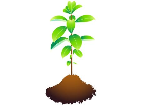 ai plant 2