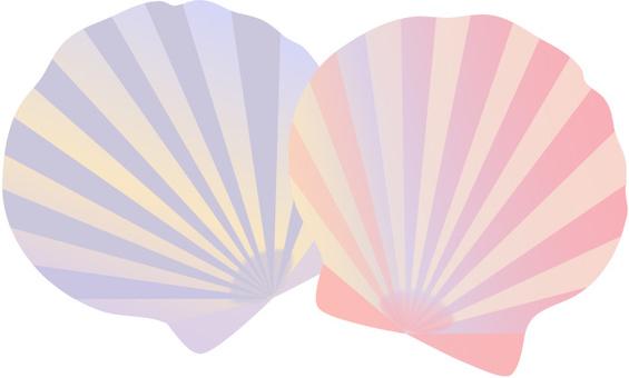 Seashell sea summer