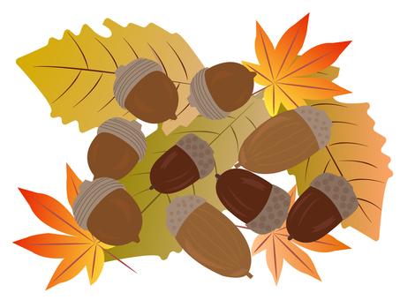 Acorns and deciduous leaves
