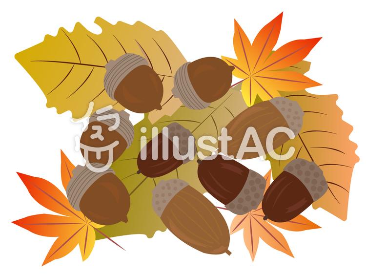 どんぐりと落葉のイラスト