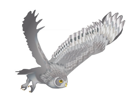 Fly 梟 03
