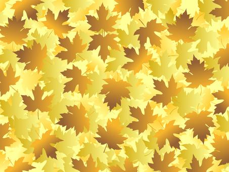 Fallen Leaf Platanus