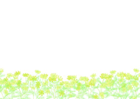 花田波斯菊插圖框架