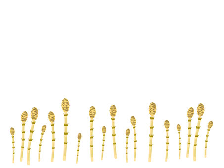 Simple horsetail background