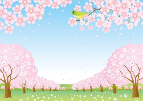 Landscape of cherry blossom row part 2