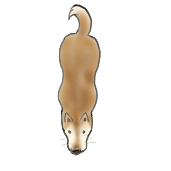 Dog seen from above (downward)
