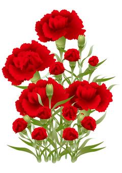Carnation 31
