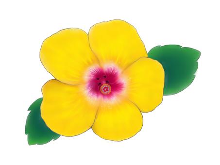 Large wheeled hibiscus