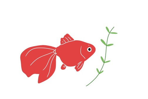 Goldfish (Ryukin)