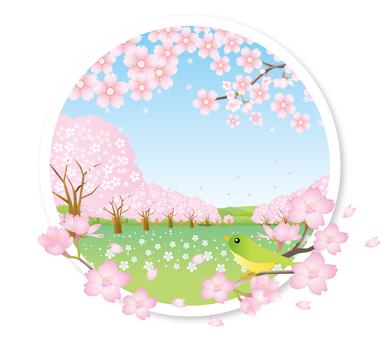만개 한 벚꽃과 작은 새