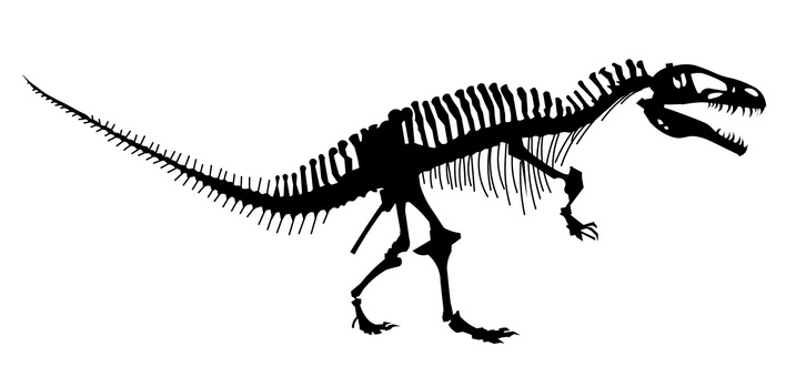 Fossils of dinosaurs