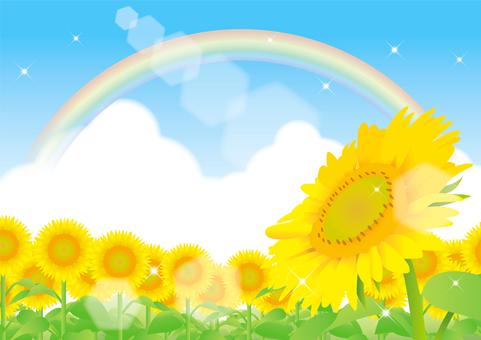 Sunflower and summer sky frame 5