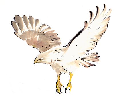 """Hawk """"hand-painted material"""""""