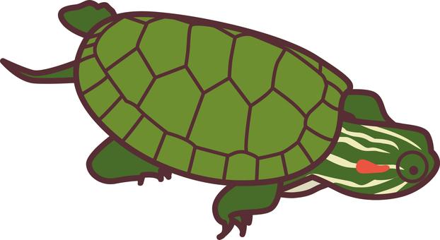 139 Turtle 2