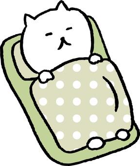 잠 고양이