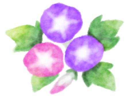 나팔꽃 2