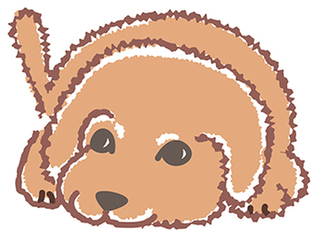 Aberdeen dog