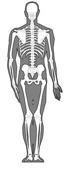 Full body skeleton - behind