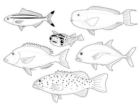[Monochrome] Saltwater fish caught in Okinawa
