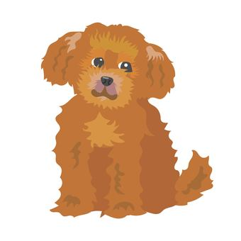 Toy poodle to sit