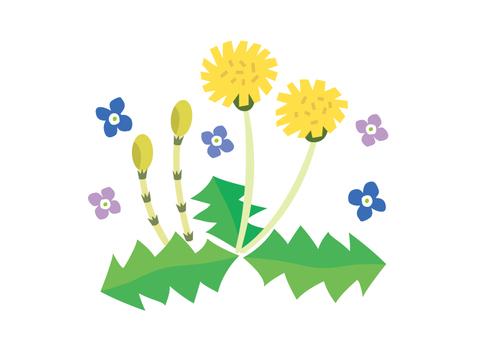 봄 꽃 민들레