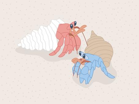 Hermit crab of sandy beach