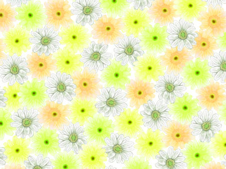 Gerbera background _ yellow