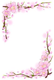 Cherry blossom postcard 2015 · length
