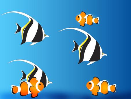 Tropical Fish Wallpaper Clown Fish and Tsunodashi