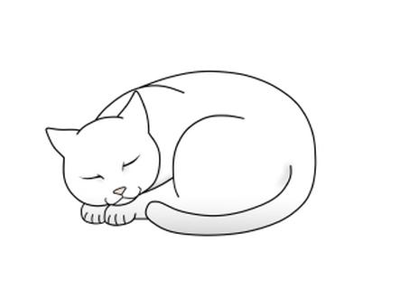 Sleeping cat · white