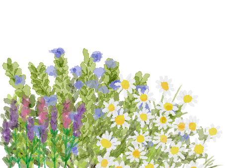 Rosemary, chamomile, lavender