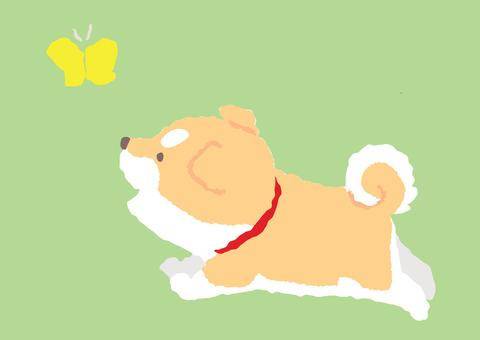 Shiba puppy - Kake scene