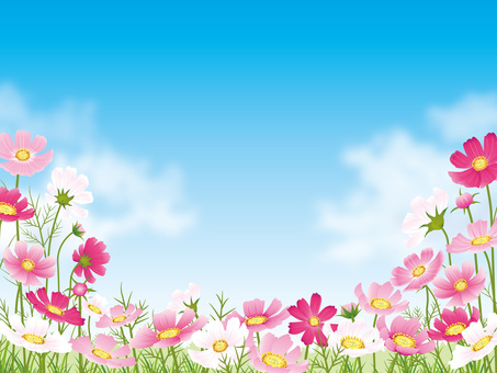 Cosmos field and blue sky background with cloud 01