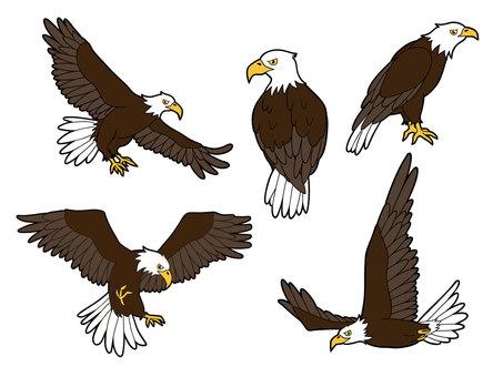 독수리 5 종