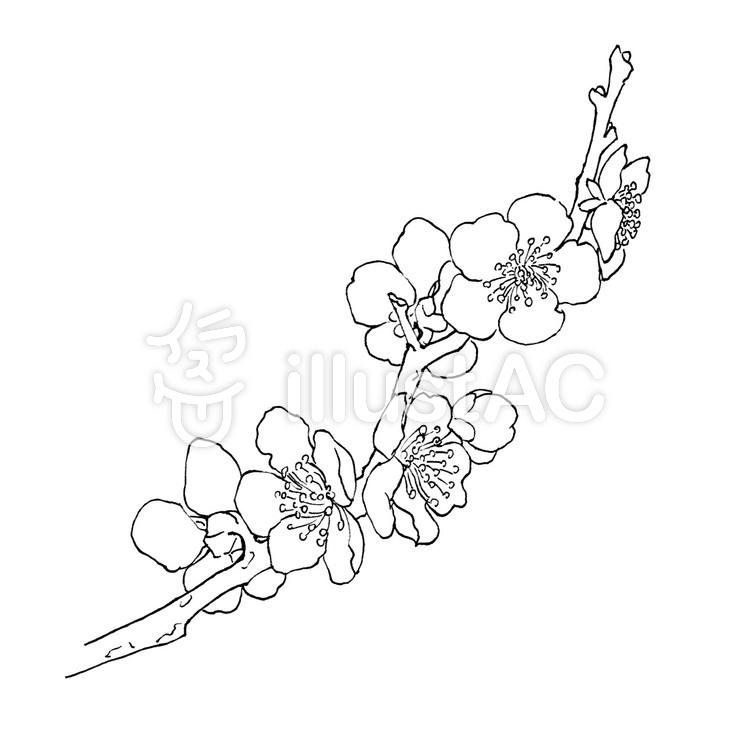最も検索された 梅の花 イラスト フリー ベスト 壁紙