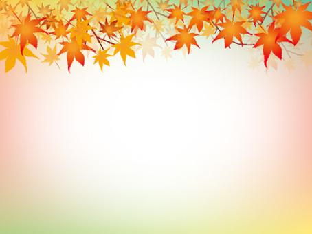 楓葉秋天的落葉