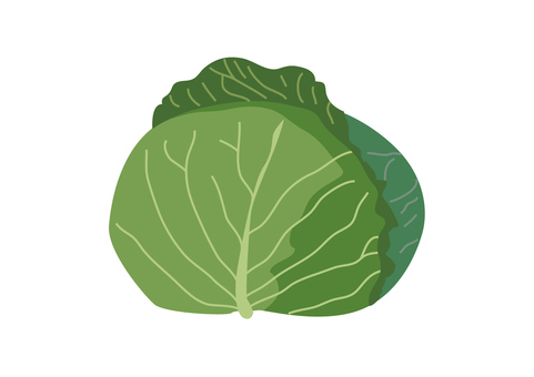 vegetable_ cabbage