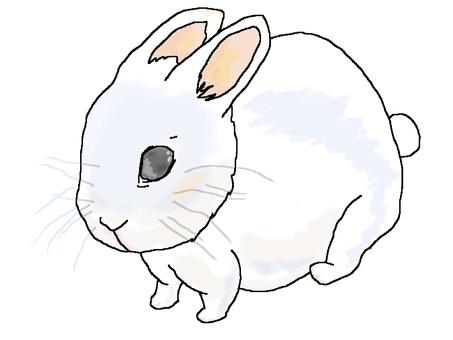 Round rabbit [round animal 6]