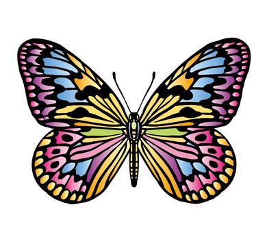 나비 -1