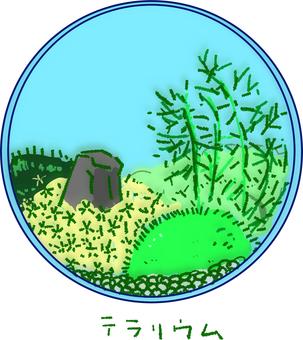 苔 terrarium
